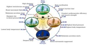 ritmo circadiano